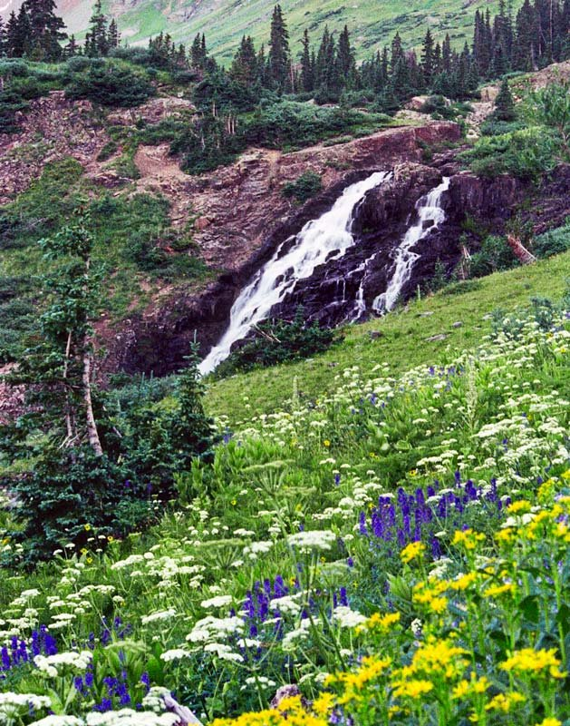 The twin waterfalls and wildflowers of Yankee Boy Basin near Ouray,Colorado.