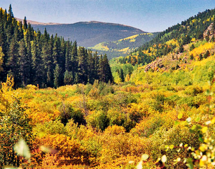 Fall foliage along the Guanella Pass road.