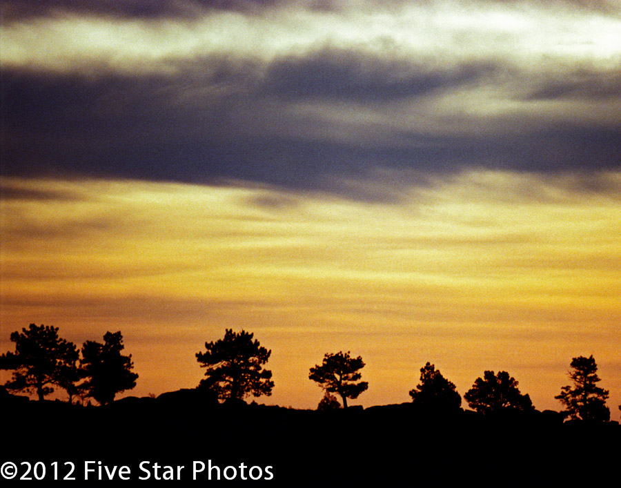 Trees in silhouette against the dawn sky at Red Rocks Park, CO.