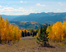 Aspens from Ripple Creek Pass