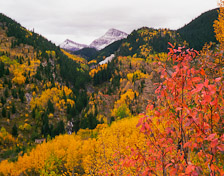 Fall foliage near Marble, Colorado