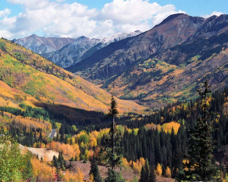 Colorful aspen on the San Juan Skyway near Ouray,Colorado.