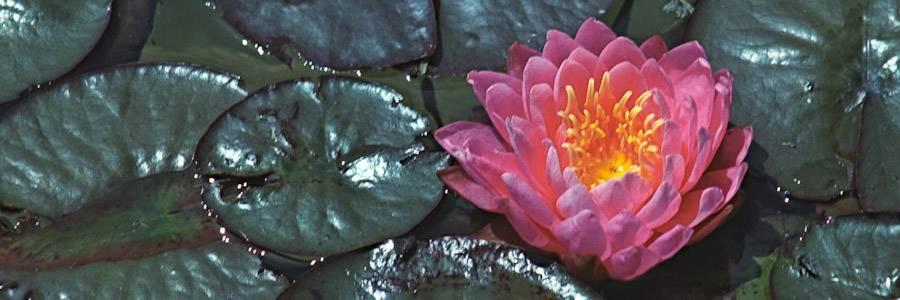 Botanic Gardens header