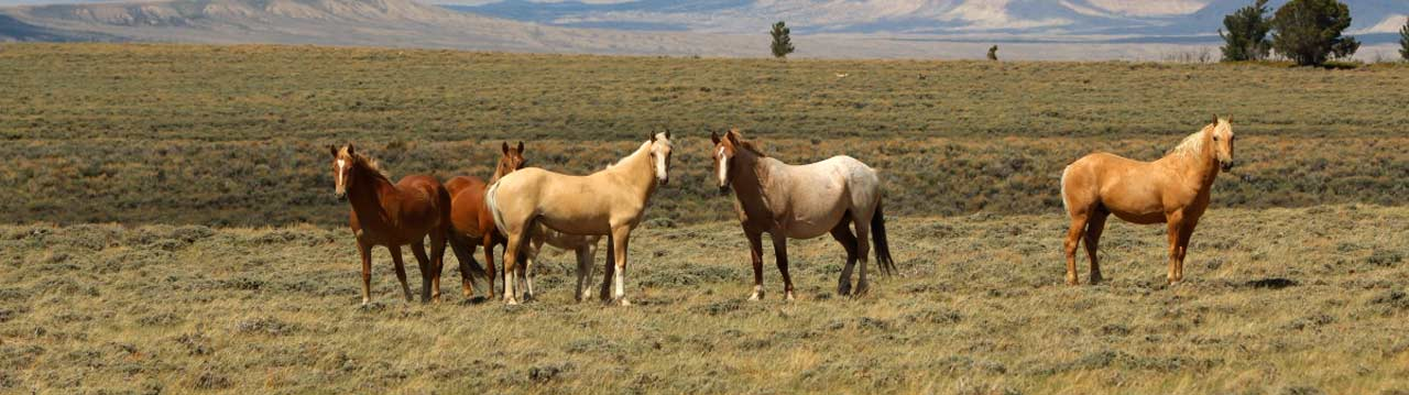 header wild horses